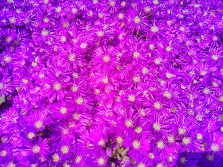Kalorifer dairesinin üzerindeki çiçekler