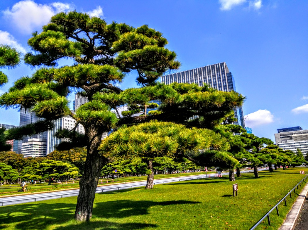 tokyo ağaçları